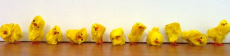 Row of Easter chicks