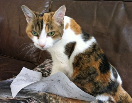 cat on homework