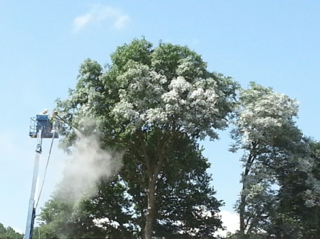 Glastonbury tree spraying