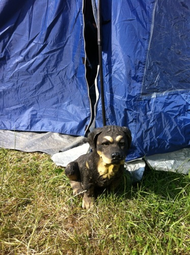 Glasto Peely's dog_4241