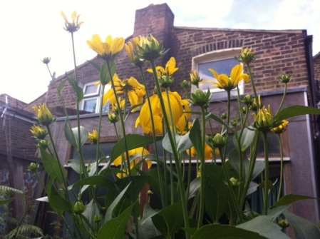 gdn yellow flowers_4731