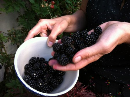 blackberries tipped into a bowl