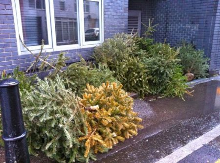 pile of abandonned Christmas trees